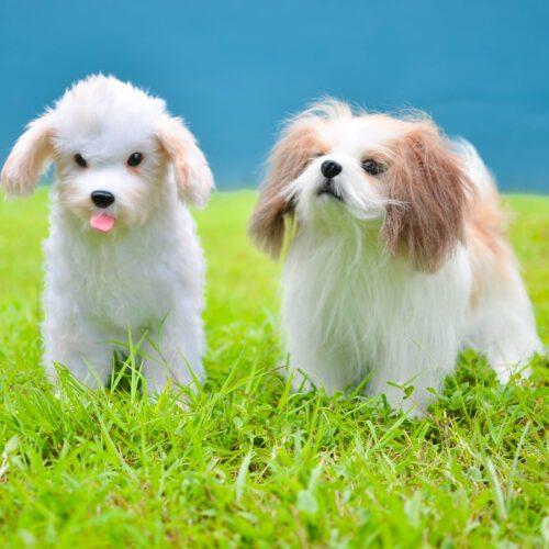 Custom Stuffed Animal Clone: Dog Replica Clones