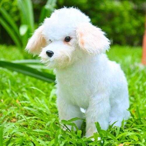 Stuffed Animal Clones: Plush Dog Toy Clone