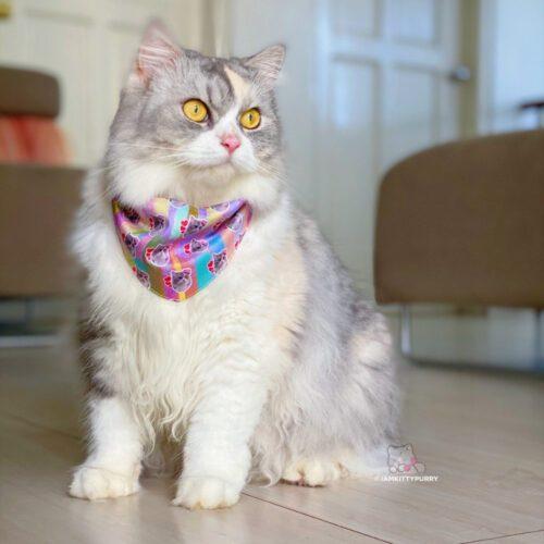 Customized Cat Bandana: Custom Bandana for Cats