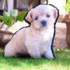 Pet Pillow - Custom Pillow of Your Pet! Dog and Cat Pillows